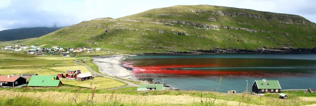 Húsavik, Faroe Islands: grindadráp