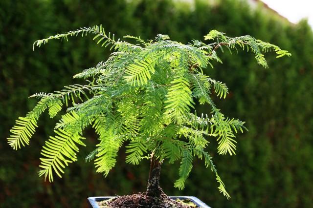 metasequoia2 _1