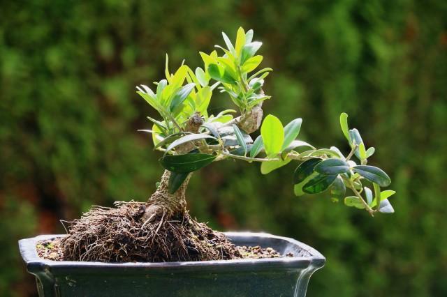 oliven2